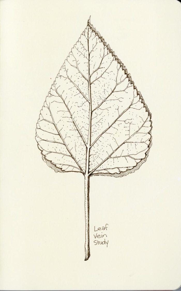 sketchbook leaf study by artist rebecca stahr