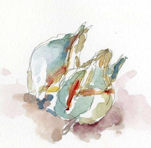 2013_watercolor_MilkweedPods001_web
