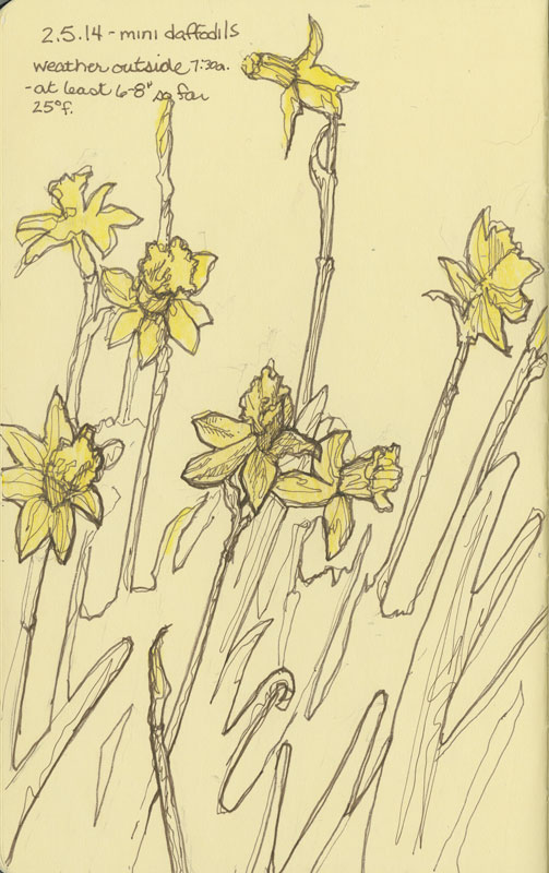 Mini Daffodils 2 - Sketchbook - © Rebecca Stahr