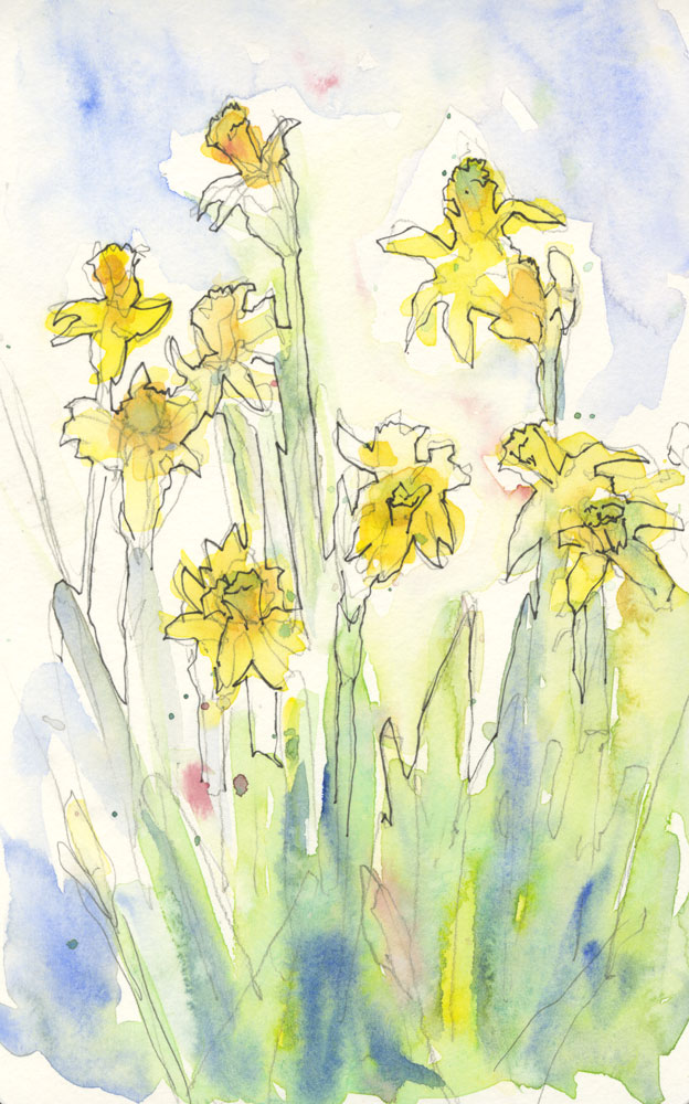 Mini Daffodils Sketch - watercolor and ink © Rebecca Stahr